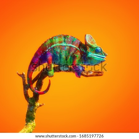 Colorful chameleon on a branch isolated on orange background. This is a 3d render illustration . Stock photo ©