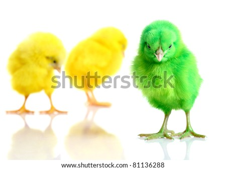 Colorful chick with broken egg