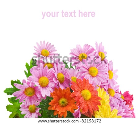 Colorful chrysanthemum bouquet flowers isolated on white background with sample text