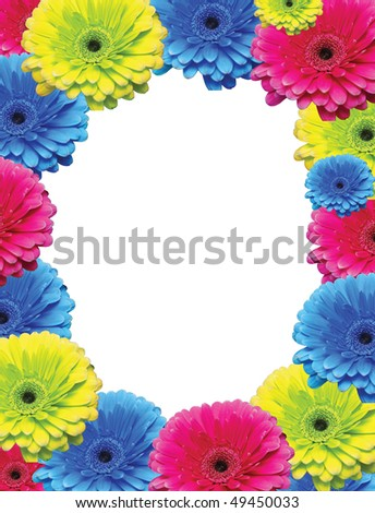 colorful chrysanthemums flowers background