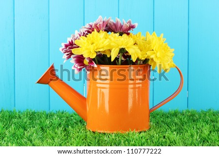 colorful chrysanthemums in orange watering can on blue fence background