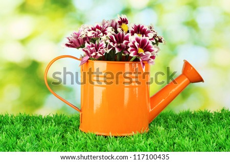 colorful chrysanthemums in orange watering can on green background