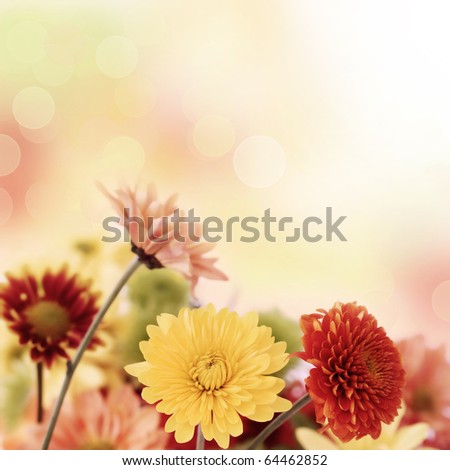 Colorful chrysathemum bouquet on warm, blurred bokeh background. Shallow DOF. - stock photo
