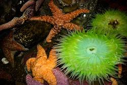 Colorful close-up of aquatic marine life