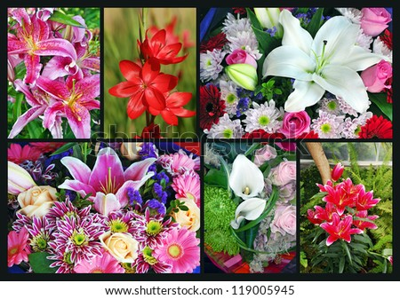 Colorful collage of assorted lily flowers