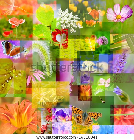 Colorful collage of flowers