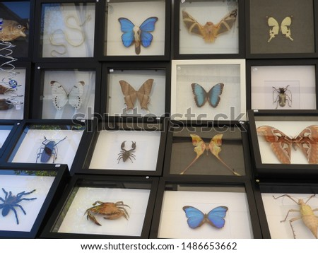 Colorful collection of stuffed or pinning animals in cabinet on market. Insects, bugs, butterflies, bats, crab snake and spider. Part of a serie. stock photo
