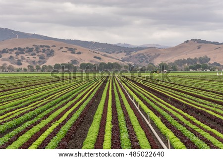 stock-photo-colorful-colourful-fields-of