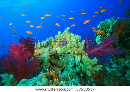 Colorful Coral and Tropical Fish on a reef