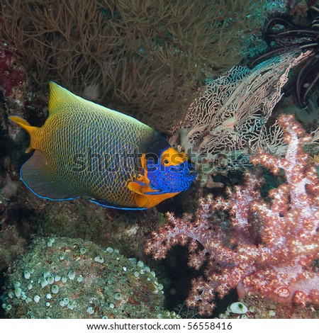 Colorful coral fish within the indian ocean