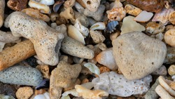 Colorful coral, pebbles, and rocks in the beach closeup.