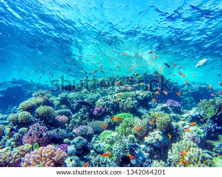 colorful coral reef and bright fish #1342064201