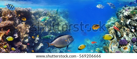 Stock Photo Colorful coral reef fishes of the Red Sea.