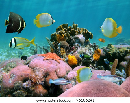 Colorful coral reef underwater with tropical fish and marine life, Caribbean sea
