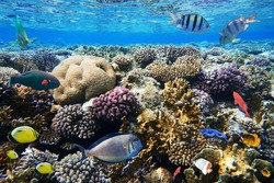 Colorful coral reef with exotic fishes of the Red Sea. Egypt.