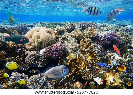 Colorful coral reef with exotic fishes of the Red Sea. Egypt. #623799020