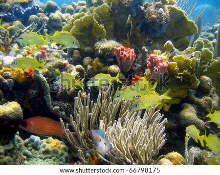 Colorful coral reef with fish in Panama, Bocas del Toro, Caribbean sea