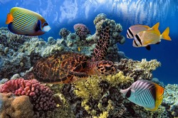 colorful coral reef with many fishes and sea turtle.