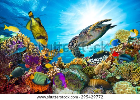 colorful coral reef with many fishes and sea turtle #295429772