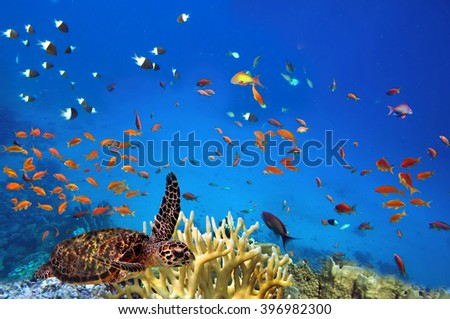 colorful coral reef with many fishes and sea turtle. Red Sea, Egypt #396982300
