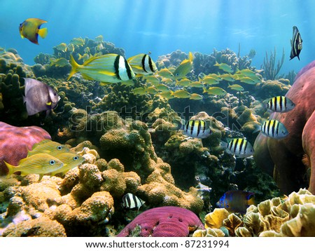 Colorful coral reef with tropical fish underwater Caribbean sea