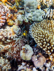colorful corals and exotic fishes at the bottom of the red sea. beautiful natural summer background.