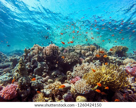 colorful corals and exotic fishes at the bottom of the red sea. beautiful natural summer background #1260424150