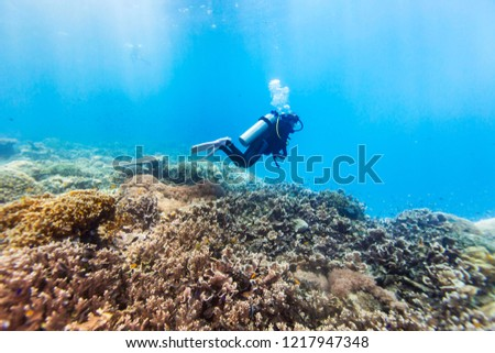 Colorful corals and tropical fishes, marine life around coral reef of Southern Leyte, the Philippines. #1217947348