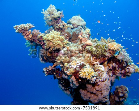 Colorful corals in the Red Sea, Egypt