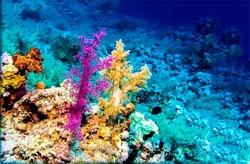 Colorful corals underwater. Underwater corals. Colorful coral in underwater scene. Underwater corals view