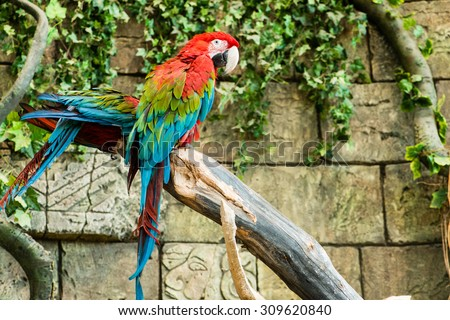 Colorful couple macaws sitting on log, focus on the parrot