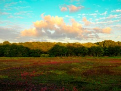 Colorful cranberry bog autumn landscape with dramatic cloudscape on turquoise and blue sky backgrounds on Cape Cod in Massachusetts