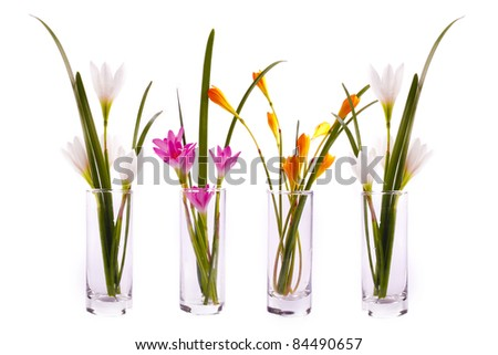 Colorful crocus flowers in glass jars on white background