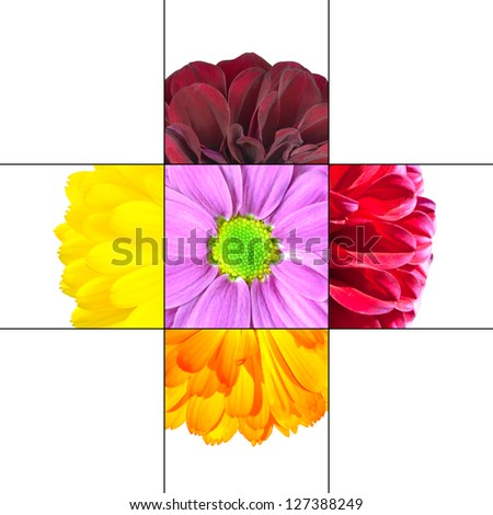 Colorful Daisy Flower mosaic design which is consisting of 9 squares on 3x3 grid with parts of Daisy or Dahlia flower.