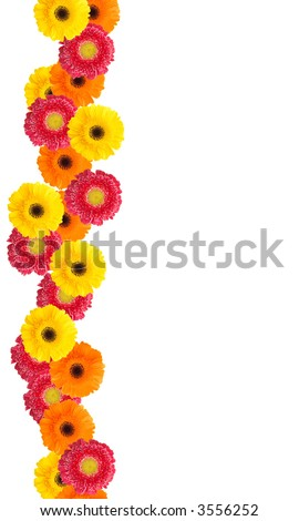 Picture Daisy Flower on Colorful Daisy Flowers Border For Your Designs And Messages   Stock