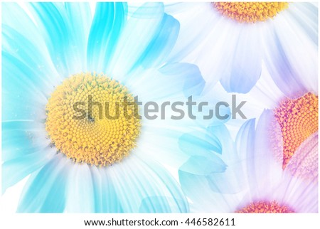 Colorful daisy flowers collage. Floral wallpaper.