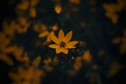 Colorful dark and moody flower.