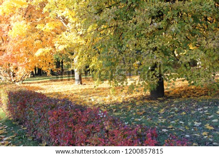 colorful defoliation in the autumn park