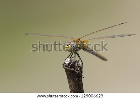 colorful dragonfly on bench and nice background