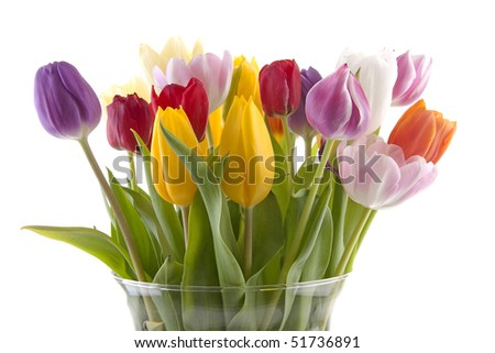 Colorful Dutch Tulips In Vase Over White Background Ez Canvas