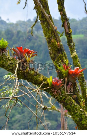 Colorful Epiphytes on branches in Costa Rica