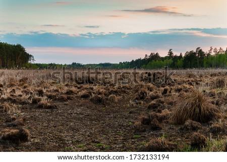 Colorful evening sky above wetland mire. Magazyn nature reserve in Sobiborski Landscape Park in Poland, Europe. Zdjęcia stock ©