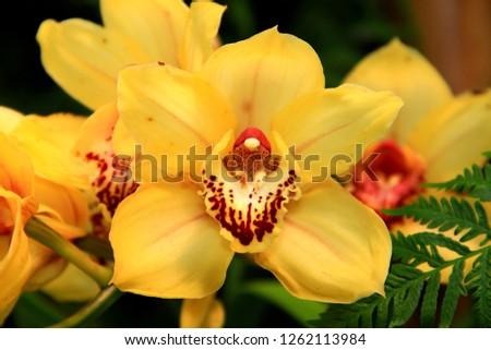 Colorful exotic Ecuadorian orchid