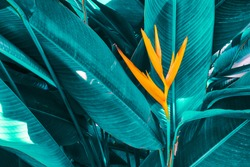 colorful exotic flower on dark blue tropical leaf nature background