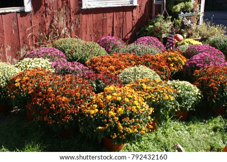 Colorful Fall Annuals #792432160