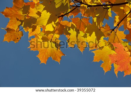 Colorful fall autumn leaf detail border
