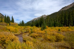 Colorful Fall Colorado leaf colors on Guanella Pass in the Rocky Mountains west of Denver.