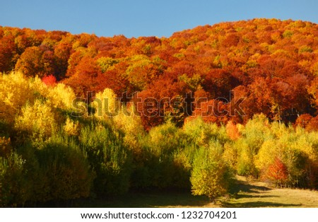 Colorful fall foliage #1232704201