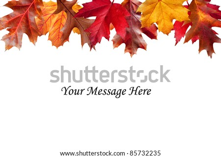 Colorful Fall foliage edging a white message area