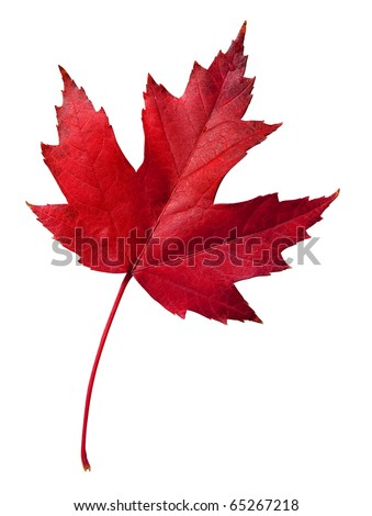 Colorful fall leaf with clipping path